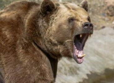 7 beleggingstips voor een bearmarkt
