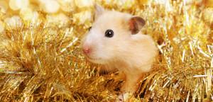 Hamster-in-the-golden-tinsel-838f575855b9826ee2ecc995f03a2de5496059bd