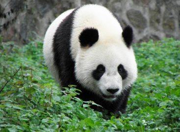 Cees Smit: De (panda)bearmarkt gaat van start